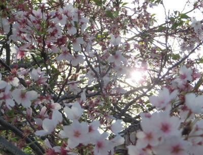 名残の花.jpg
