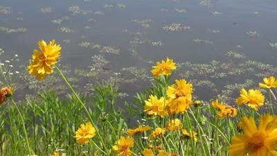 夏の池.jpg