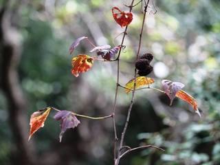 山の秋.jpg