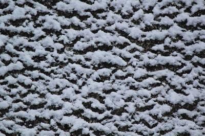 庭先の雪.jpg