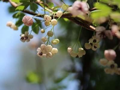 春の午後.jpg