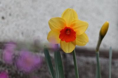 春の夢.jpg