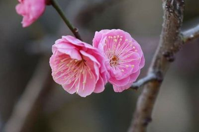 春の宵.jpg