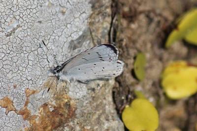 春の蝶.jpg