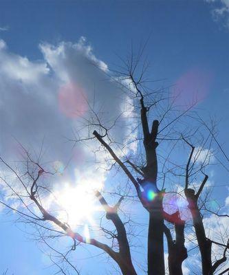 春の雲.jpg