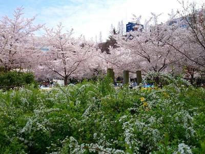 春爛漫.jpg