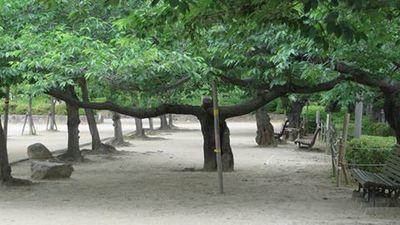木の形.jpg