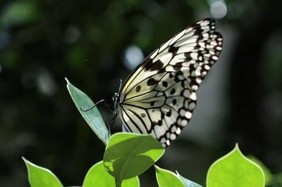 梅雨の蝶.jpg