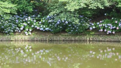 池に映る.jpg