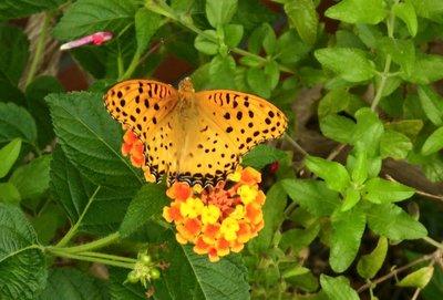 秋の蝶.jpg