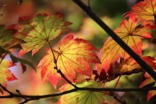 秋ゆくや.jpg