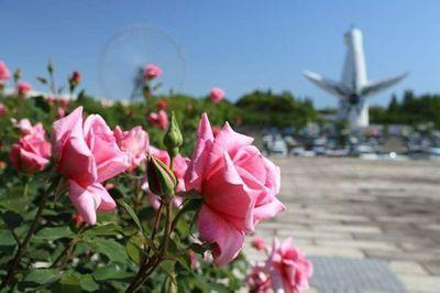 薔薇の香.jpg