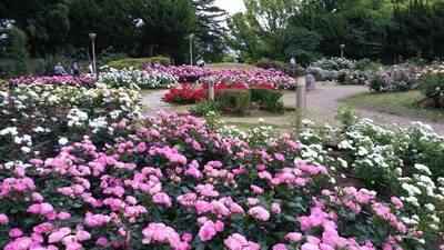 薔薇園.jpg