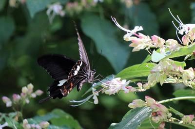 蝶を追う.jpg