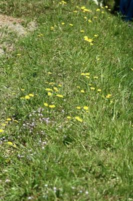 野の春.jpg
